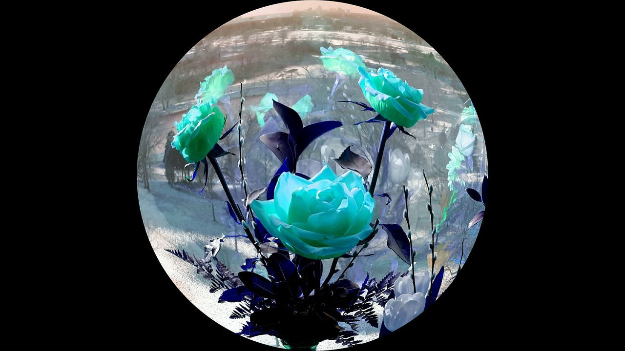 Pastel Power Soft Pastels Bright Photomanipulation Webdesign Chic Teal Window Window Reflection Spring Pop Floral Botanical Orb