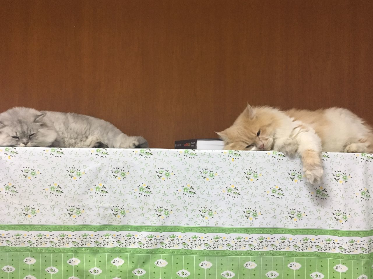 domestic cat, pets, domestic animals, animal themes, mammal, one animal, feline, indoors, sleeping, relaxation, no people, bed, day, close-up, persian cat