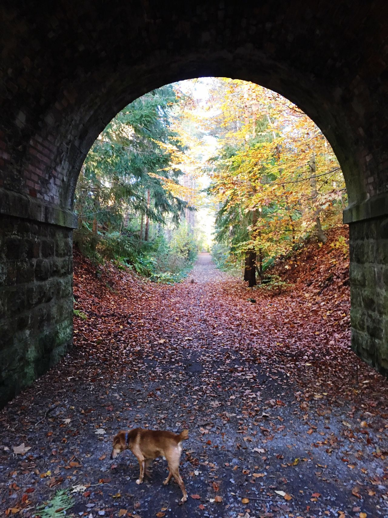 Tree Autumn Animal Themes Domestic Animals Mammal No People Pets Day Forest Nature One Animal Full Length Outdoors Tunnel Aboyne Autumn Colors Autumn