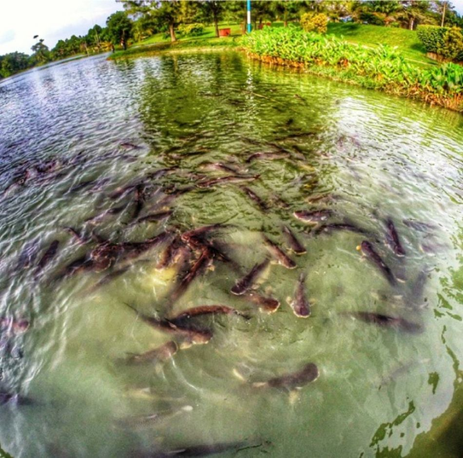 Water Reflections Fishes ? !