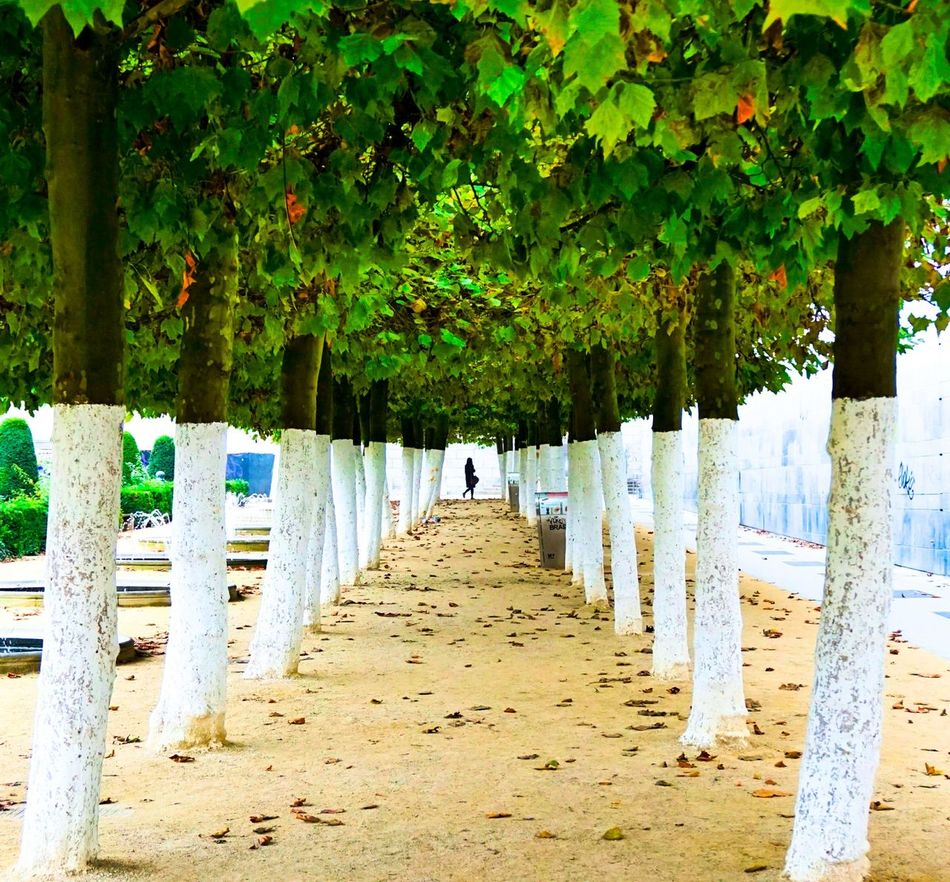 Trees In A Row Green Color Beauty In Nature In A City White Color Nature