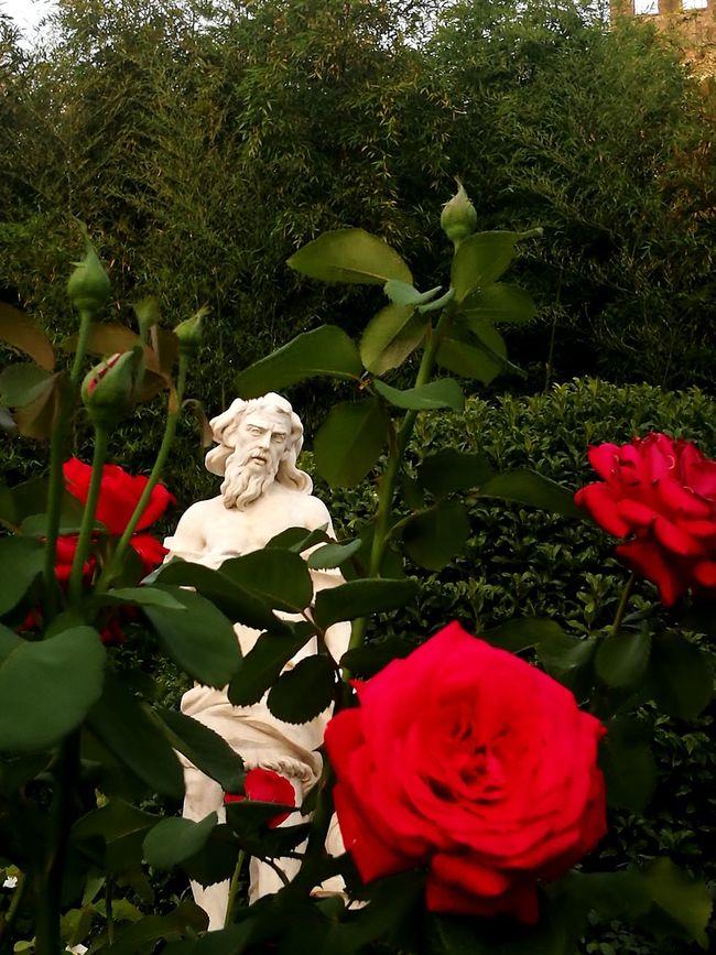 Growth Leaf Flower Plant Red No People Outdoors Rose🌹 Sculpture Garden Garden Sculpture Hidden beauty