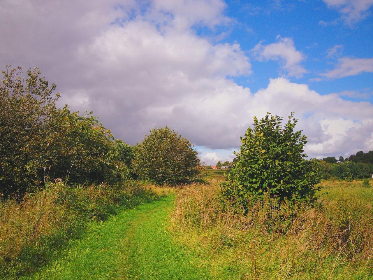 Forest path. Near Tilst, Aarhus, Denmark. Forest Paths Tilst Aarhus Denmark