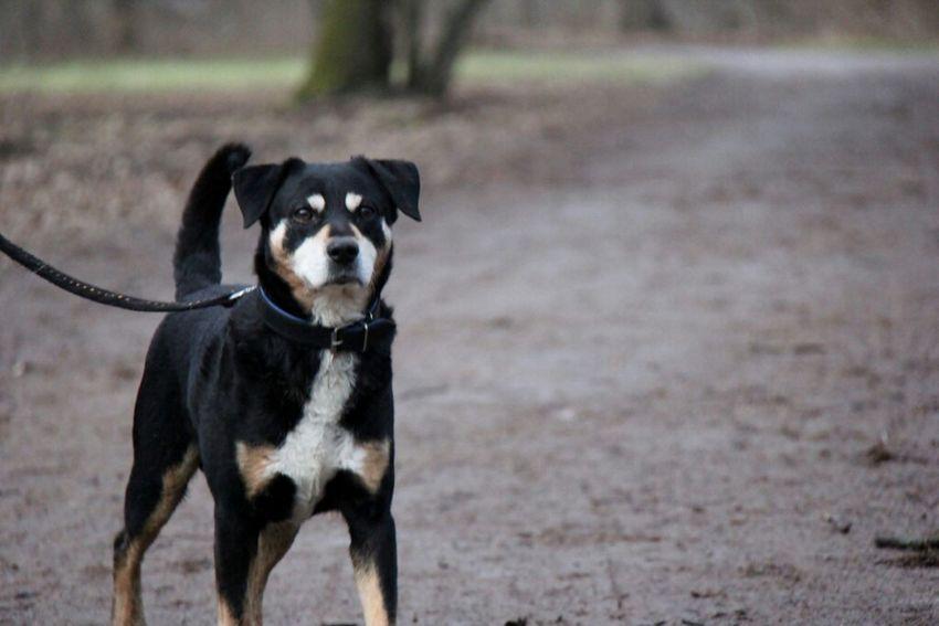 Dog Dogs SweetLe