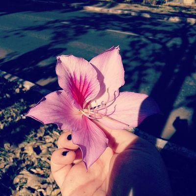 Flower Pinkflower Vintage Hipster