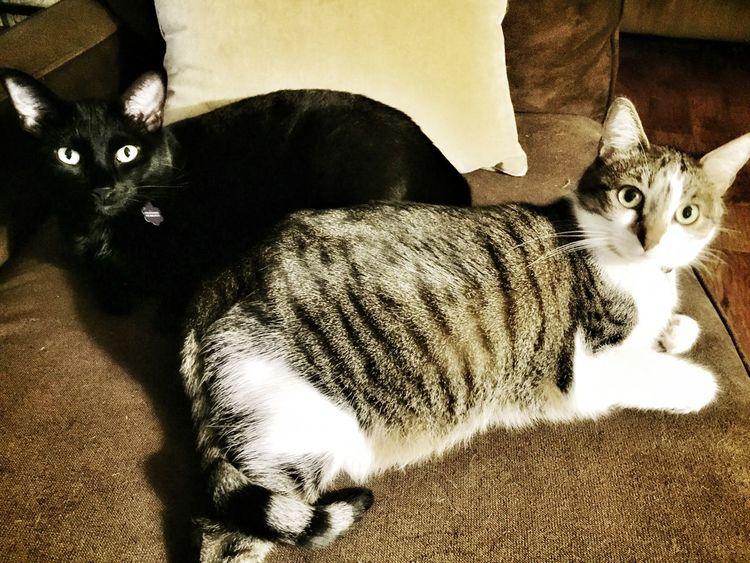 Cinder & Gracie EyeEm Animal Lover My Cats I Love My Cats  Cute Cats Cat Lovers Cats Of EyeEm Love My Kitty Cats Enjoying My Cats Felines House Cats