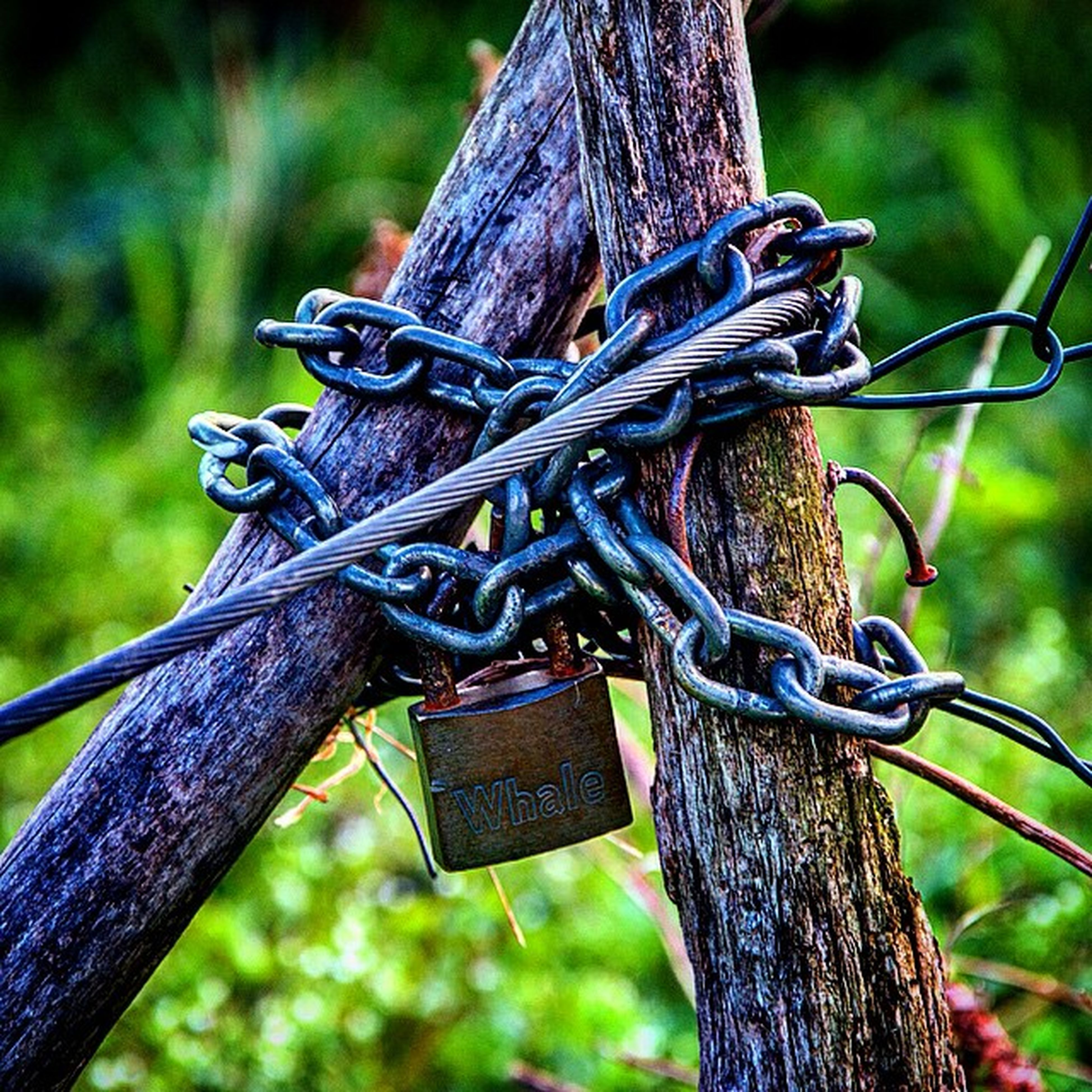 focus on foreground, close-up, tree trunk, metal, tree, wood - material, rusty, safety, protection, chain, fence, security, old, hanging, day, outdoors, pole, strength, rope, part of