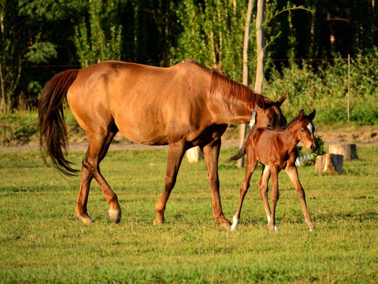 Horses Domestic Animals No People Baby Horse Livestock Animal Photography