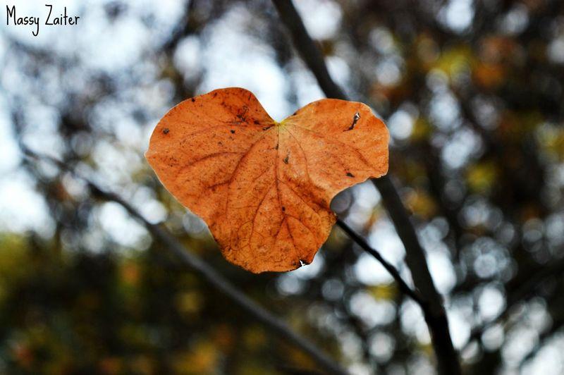 Expira el otoño... Autumn Otoño Leaves Lonely Hojas Parqueelcapricho