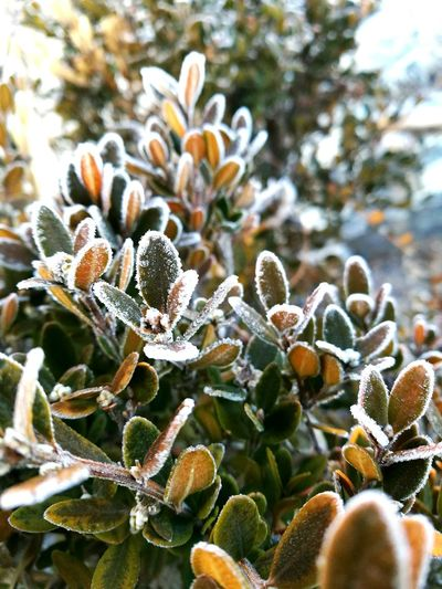 -2°C Travel Korea EyeEmNewHere Nature Growth Beauty In Nature Outdoors Focus On Foreground Plant Close-up No People Fragility Day Cactus