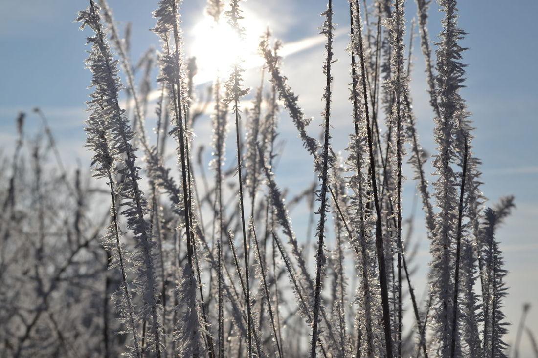 EyeEmNewHere I ICE. Memories Nikon Sun White Color Winter
