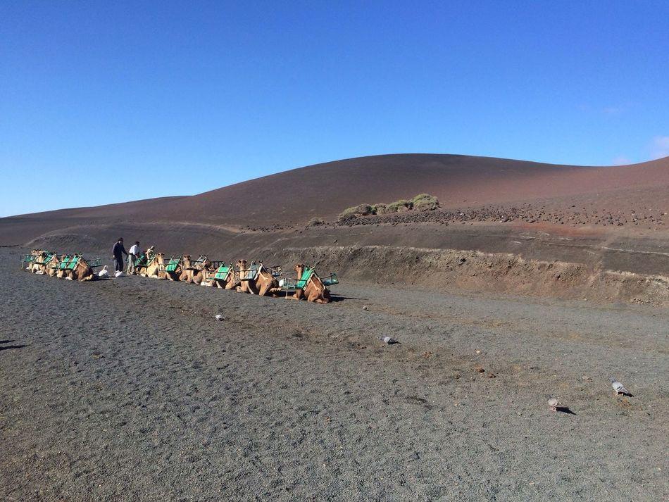 Desert Desert View Sand The Great Outdoors - 2016 EyeEm Awards Yellow Blue Sky CF Camels Lanzarote