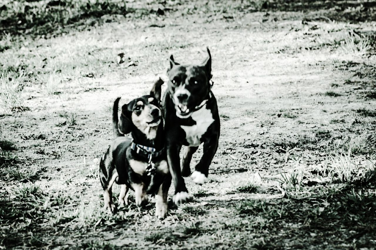 Dog Pets Animal Themes Domestic Animals Mammal Running Motion Outdoors No People Day Nature Bestfriends Dogslife Dog Photography