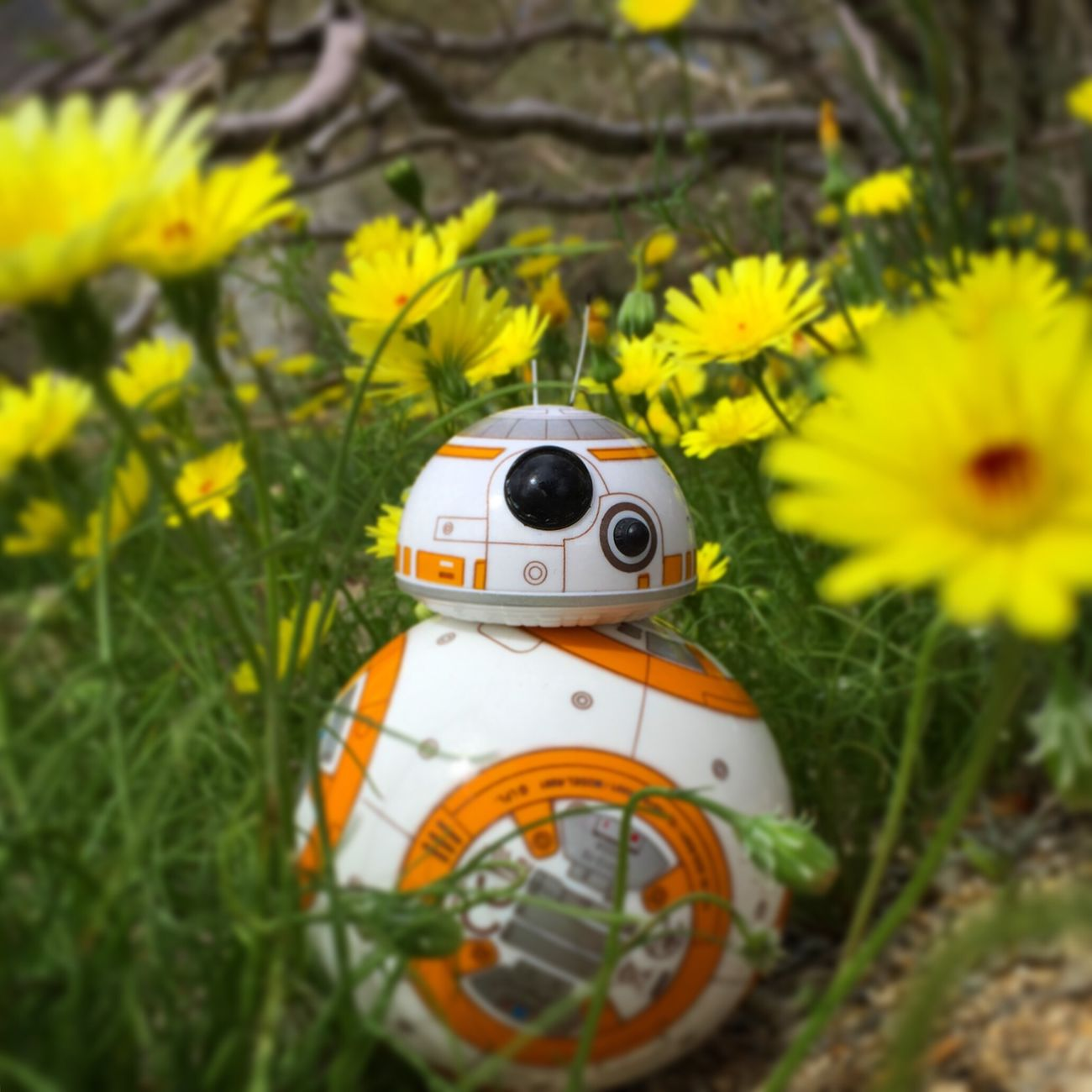 Blooming BB-8 Starwars Spherobb8 Bb8 Adultingwithtoys First Eyeem Photo