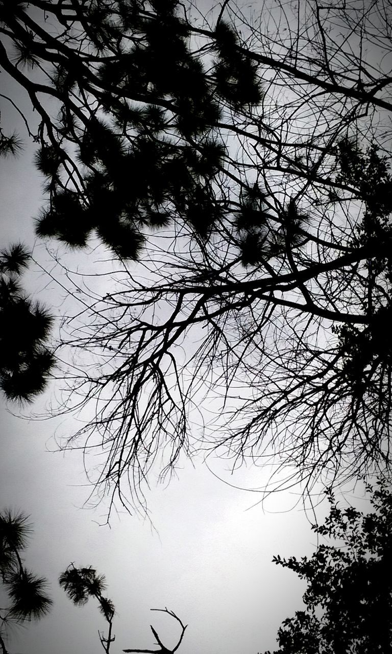 tree, low angle view, branch, nature, silhouette, sky, no people, outdoors, growth, beauty in nature, day, bare tree