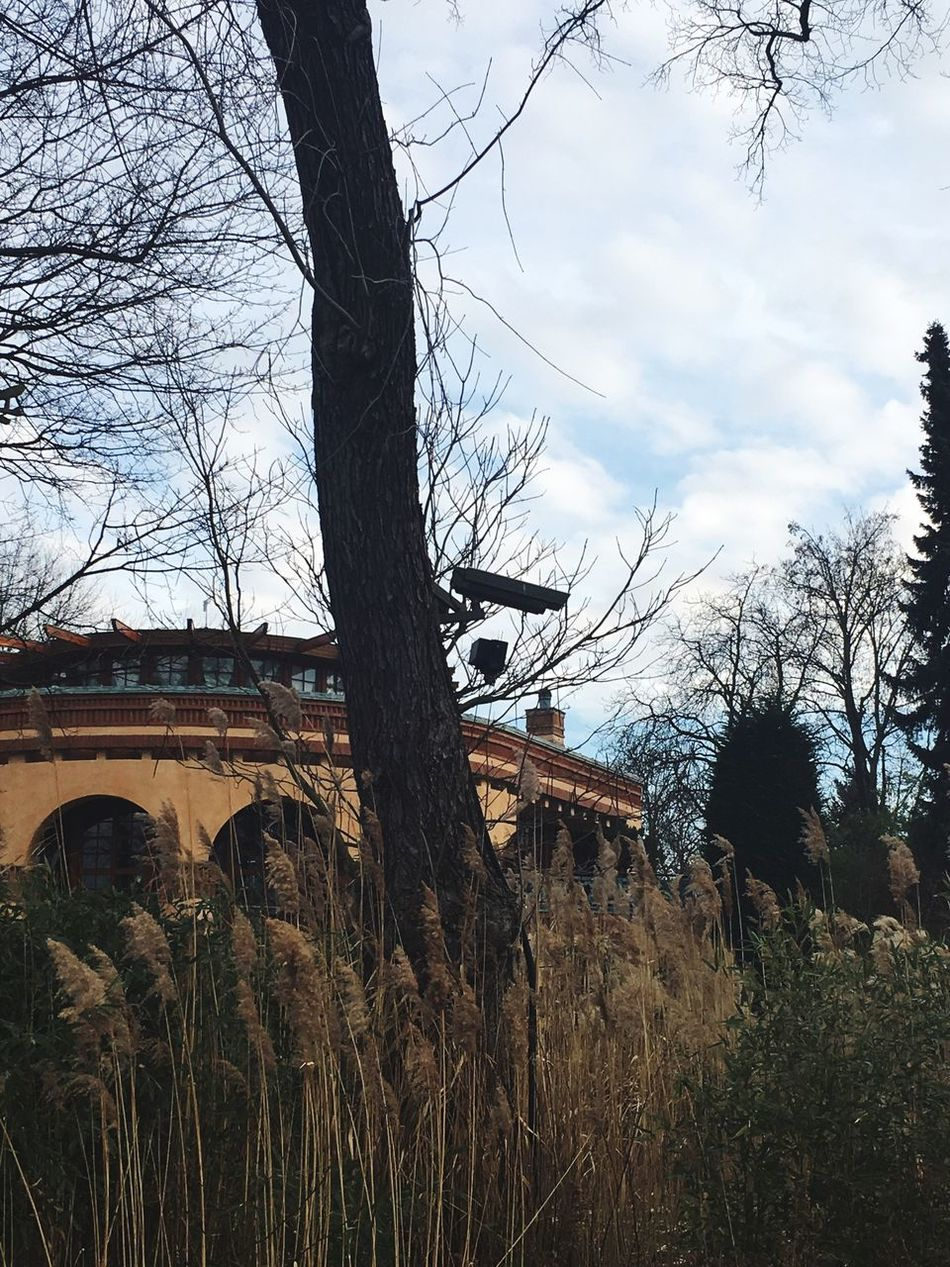 """Private"" Tree Outdoors No People Day Nature Camera Germany Monitoring überwachung überwachungskamera Big Brother Technology"