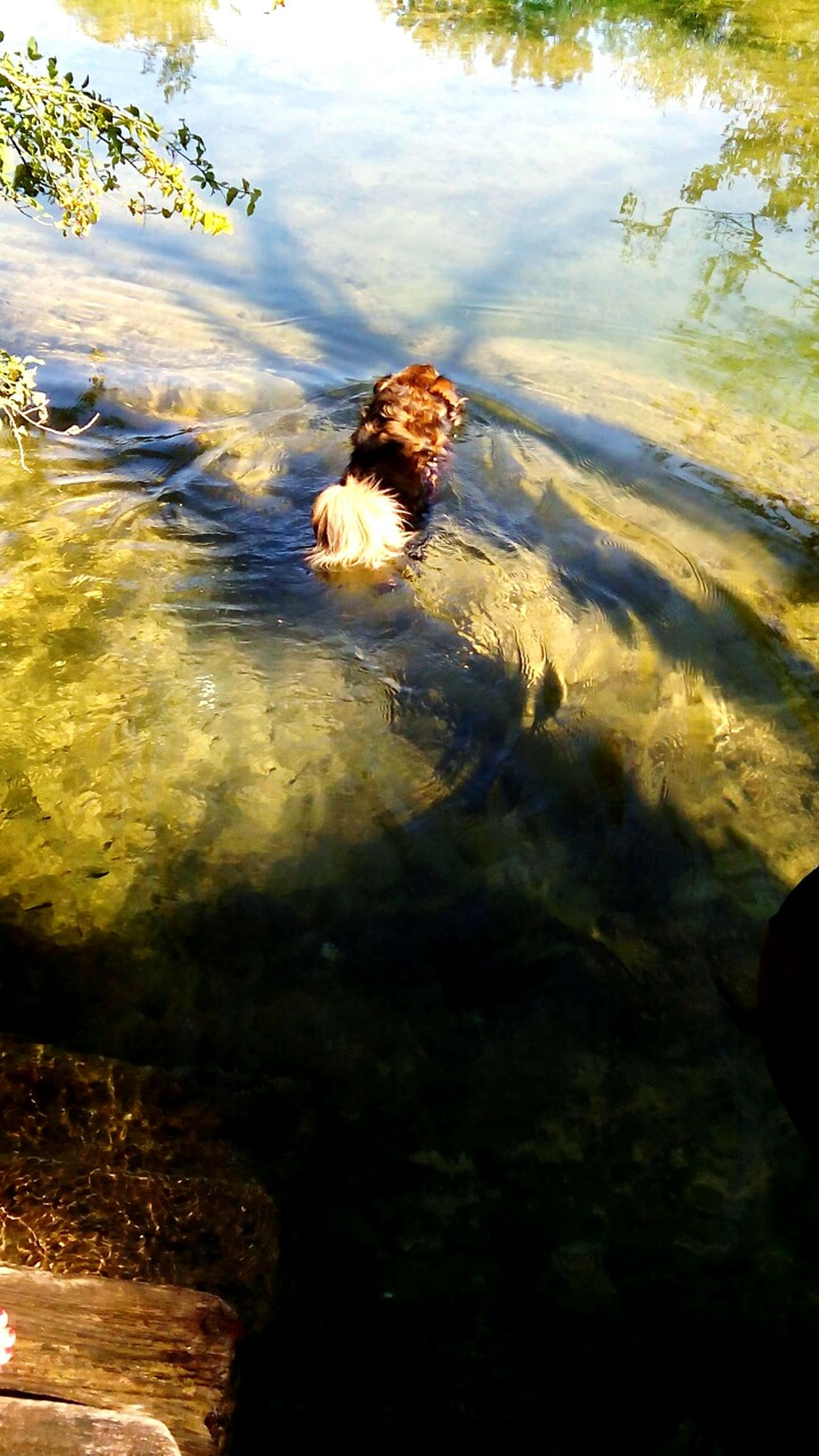 Riverscape Mreznica Open Edit Croatia Urban Sunbathing Water Reflections Walking Around Tadaa Community Dog