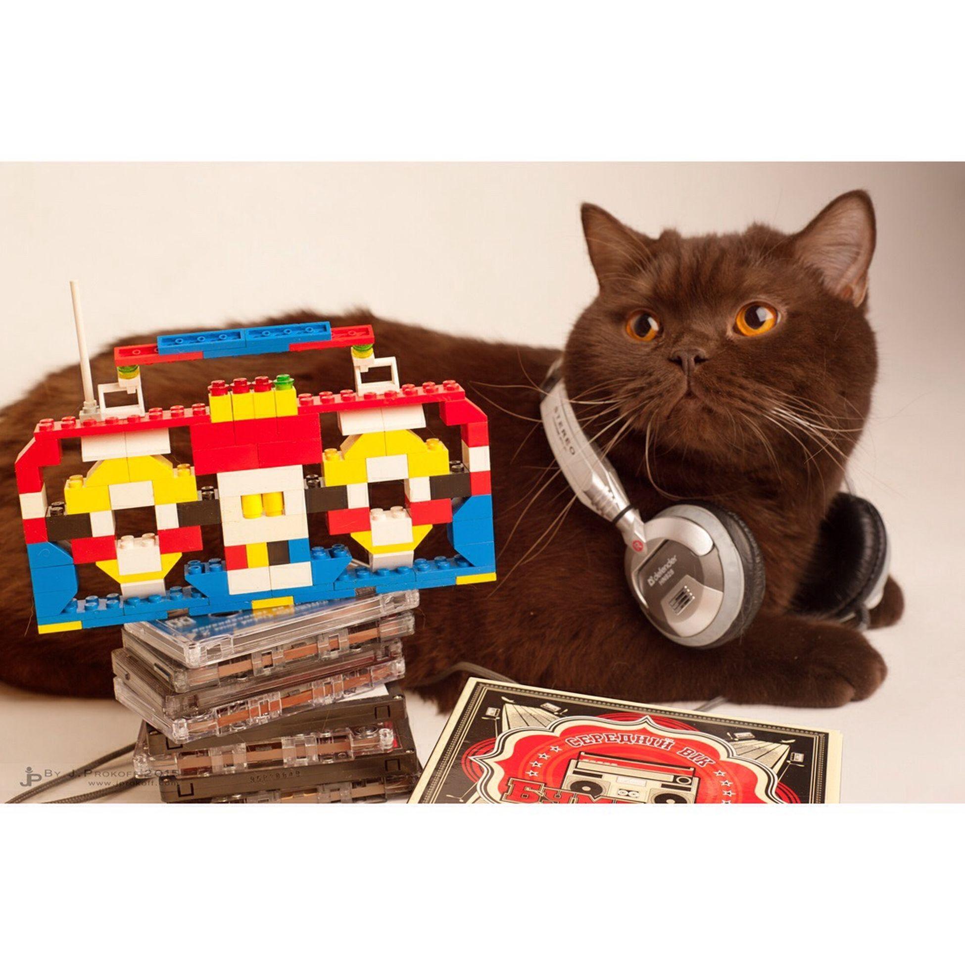 Boombox&Oliver. 🎶😸 Music Boombox Cat Britishshorthair Oliver Mycat British Home оливер риф кот люблюкота британец шоколад Chocolate бумбокс музыка Меломан лего LEGO