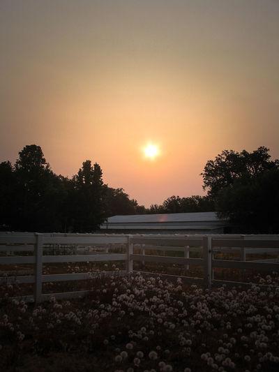 California Lake County, Ca Light Moody Sky Outdoors Sky Summer Sunset The Way Forward Tranquil Scene Tree Wish