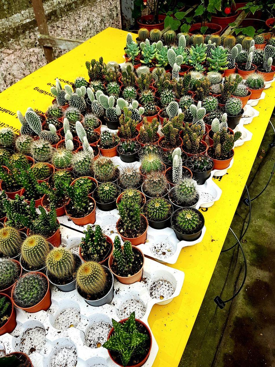 Nice cactuses 😊 Cactus Garden Fraserhill Malaysia Pahang