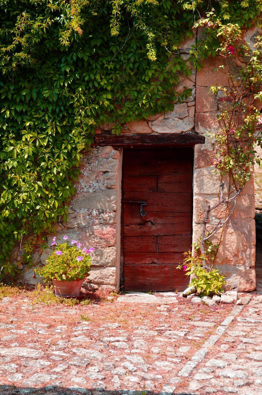 door, plant, day, no people, outdoors, architecture, built structure, building exterior, leaf, growth, nature, flower, open door