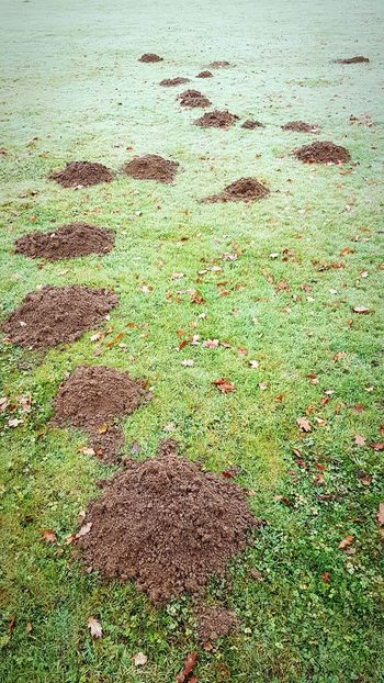 Full Frame No People Day Outdoors Nature Football Playing Field Green Color Grass Moles Mole Hills Mole Hill Caddyshack...lol