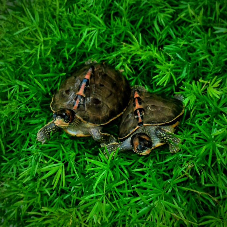 Animals In The Wild Grass Animal Themes Nature Green Color One Animal Animal Animal Wildlife No People Reptile Tortoise Outdoors Close-up Tortoise Shell Day Tortoiselife Tortoise Pet