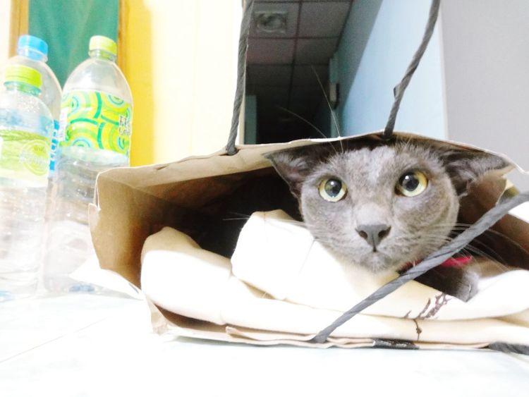 Thecat Kitty Cat Kitty Cat Funny