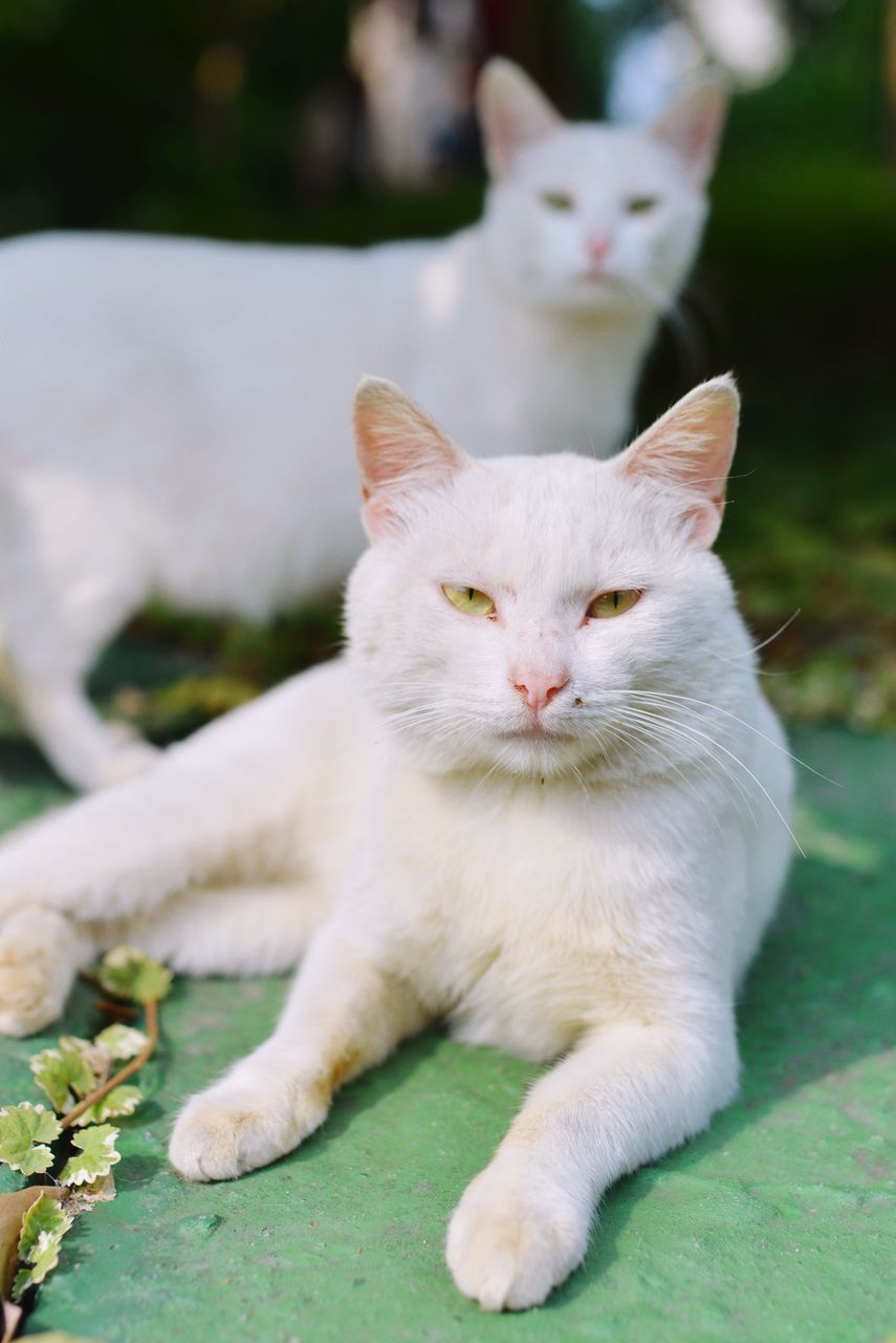 Portrait Of Cats Relaxing On Field