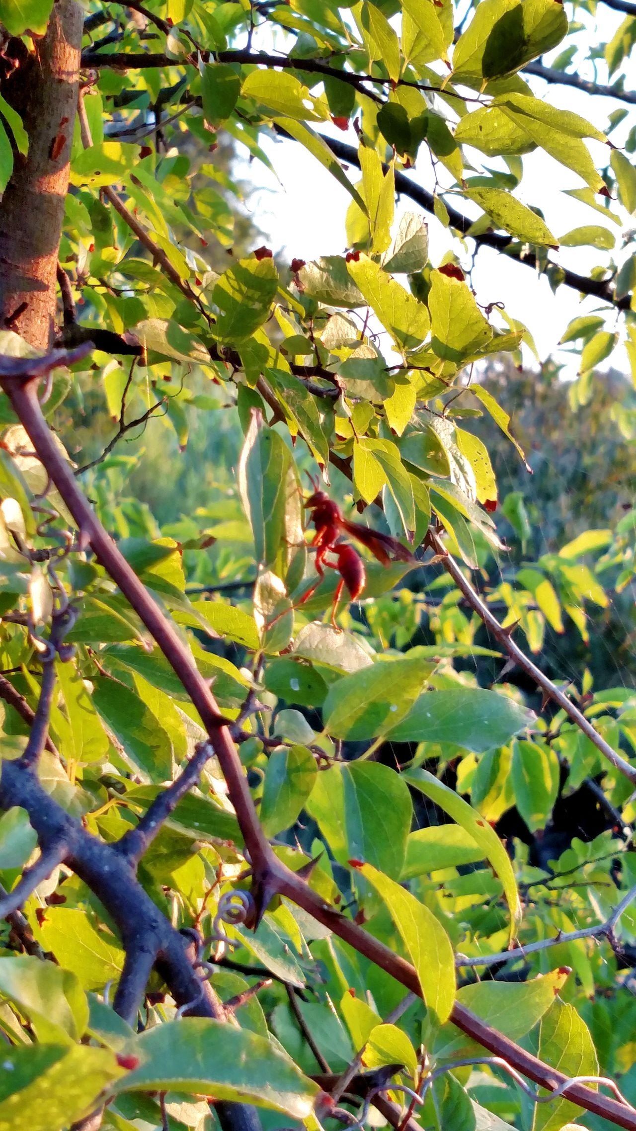 Looks like I'm not the only one enjoying the sunrise this morning. This Red Wasp was staying close by but did not bother me a bit. Eyem Best Shots Morning Light Check This Out Martin Lake State Park EyeEm Nature Lover Summertime Sunrise_Collection Dew Drops Eyem Market Buzzing Around Appreciation Appreciating This Moment