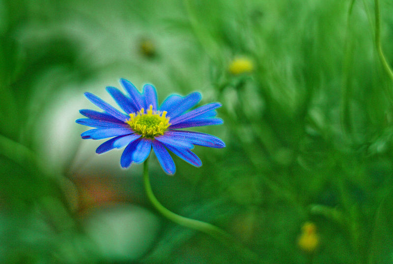 Bokeh Hello World Photography Nature Pentax Macro Flower Nature Photography F 2.8 Helios 44-2 Manual Lens