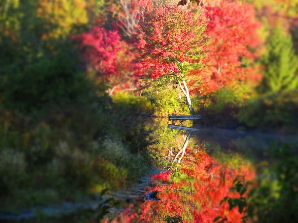 boom. Autumn Colors Leaves Seasons Landscape Fall Beauty New England  Water Reflections Fall Leaves