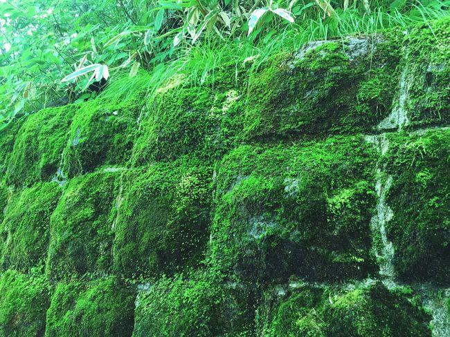 Moss Mossporn Green Green Color Nature Escaping Walking Around Relaxing Summer Japan Enjoying Life Taking Photos Good Morning Hello World
