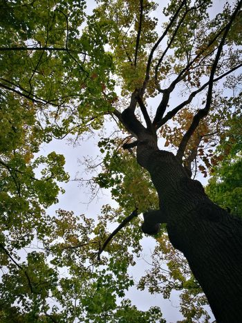 Tree Low Angle View Branch Outdoors Day Forest Nature Green Color Growth Sky Beauty In Nature No People Backgrounds