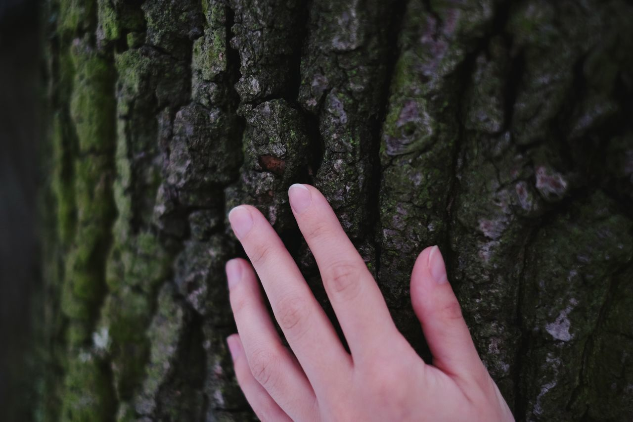 Skin contact. Hugging A Tree Green Trees Tree Skin Hand Contact Nature Natural Beauty