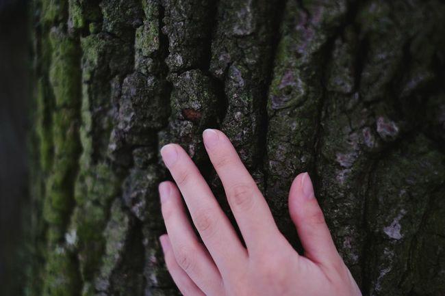 Skin contact. Hugging A Tree Green Trees Tree Skin Hand Contact Nature Natural Beauty