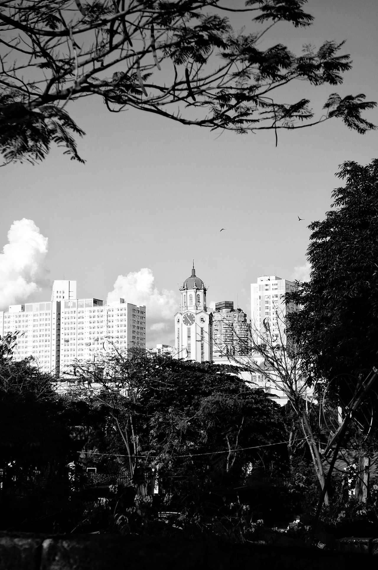 View of the building of city hall of Manila through the Intramuros with a big clock attached on it. Tree City Architecture Cityscape Outdoors No People Urban Skyline Modern Cloud - Sky Silouette & Sky Historical Monuments Black And White Photography Blackandwhite Photography Beauty In Nature Historical Place Silhouette_collection Black And White Collection  Landscape_photography Black And White Collection  Intramuroswalls Intramuros,manila Black And White Collection  Silhouette Photography Black And White Collection  Landscape