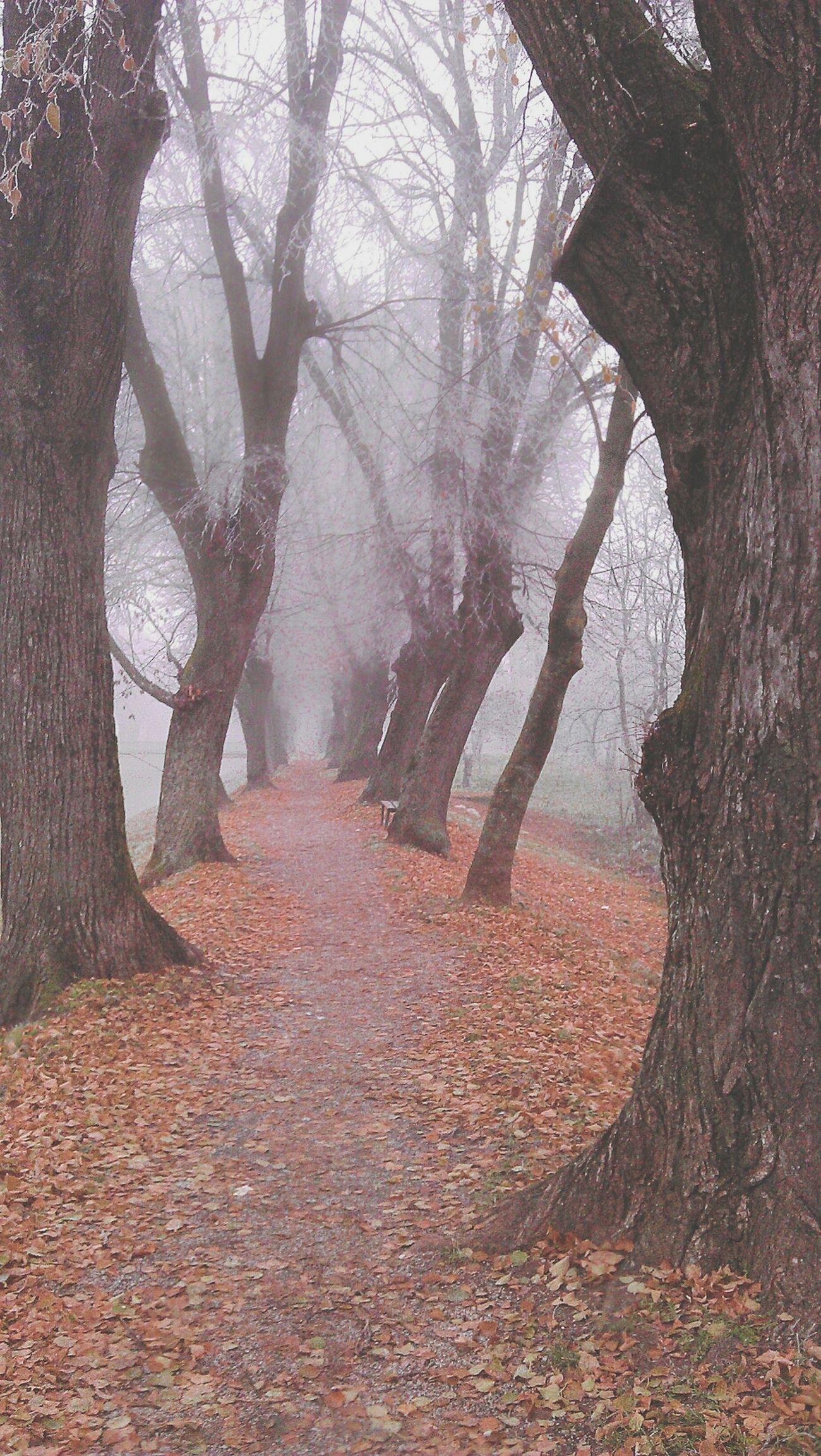 Walking Eye4photography  Eye4nature Foggy Day