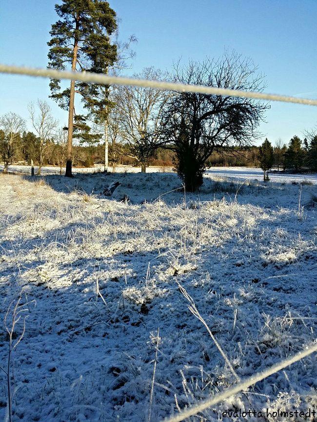 Snowcristals  Snow Frosty EyeEm Nature Lover
