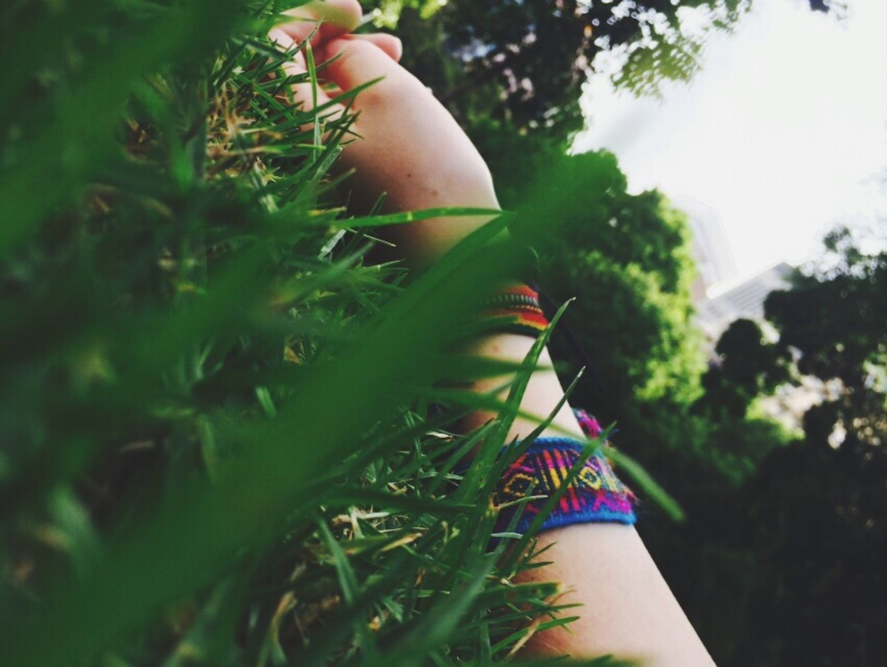 real people, human body part, one person, human hand, day, tree, outdoors, plant, growth, lifestyles, grass, close-up, nature, flower, people