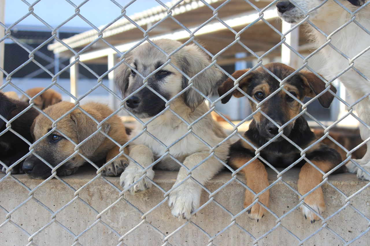 Babydogs Cage Chainlink Fence Day Life Saddog Shelterdogs Togetherness
