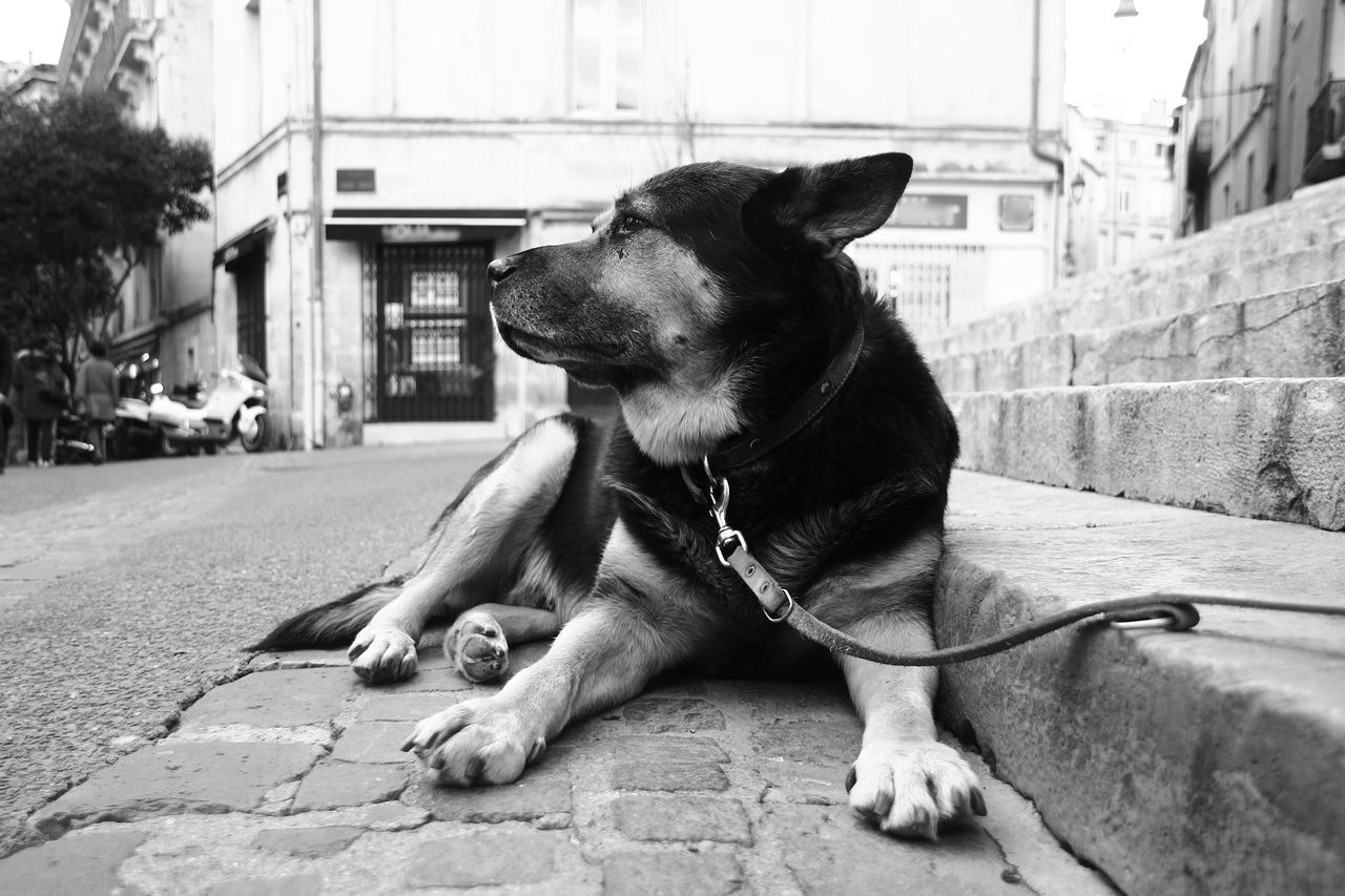 Animal Themes Black And White Black And White Photography Dog Good Dog Looking Away Loyalty Montpellier No People Pets Relaxation Resting