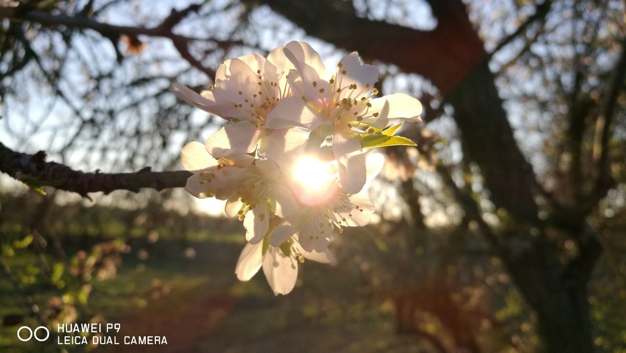 Speciallight meets specialflower.... Nature Focus On Foreground Beauty In Nature Tree Branch Sunlight Close-up Blossom Growth No People Plant Flower Flower Head Almond Tree Outdoors Day Beauty In Nature GetbetterwithAlex Springtime PalmaDiMaiorca Originalpicture