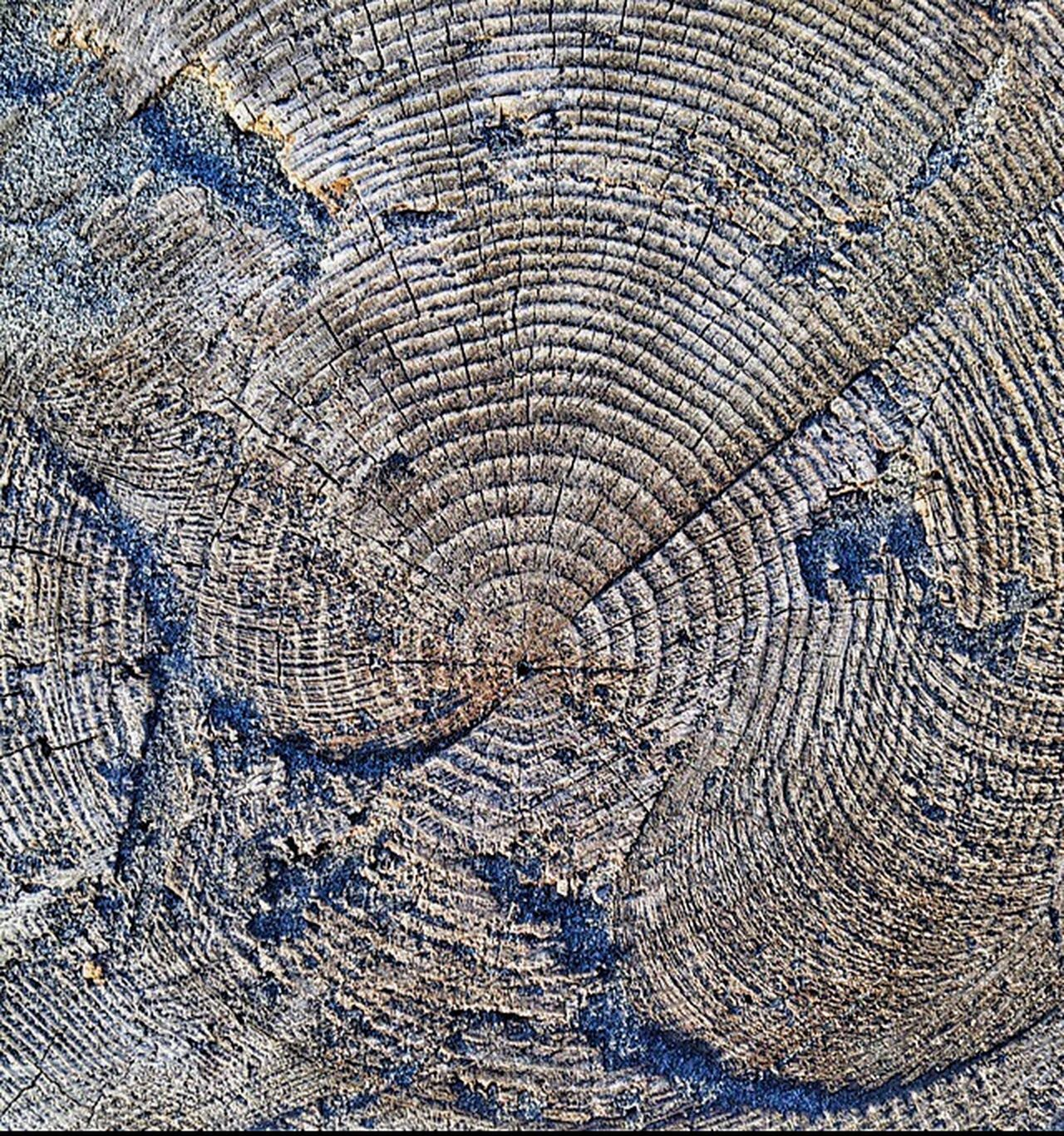 Patterns & Textures Driftwood Nature Still Life Views Perspective Shapes In Nature  Beach Photography Nature Photography Textures And Surfaces Abstractions Landscape #Nature #photography Textured  Beach Texture Patterns In Nature Old Oregon Coast Patterns Abstract Nature
