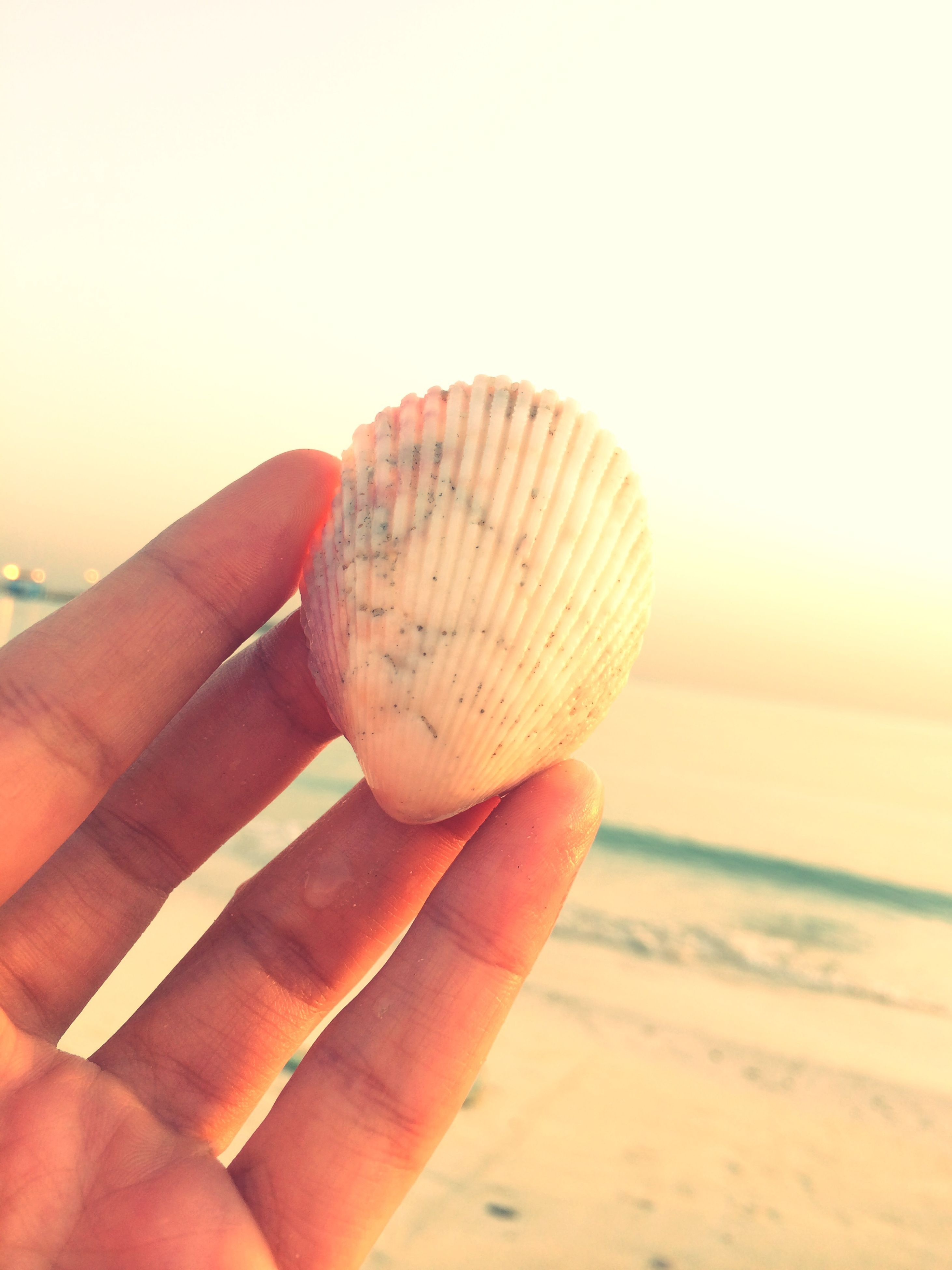 person, holding, part of, cropped, beach, human finger, food and drink, close-up, personal perspective, sand, food, unrecognizable person, focus on foreground, seashell, animal shell, sky, sunlight