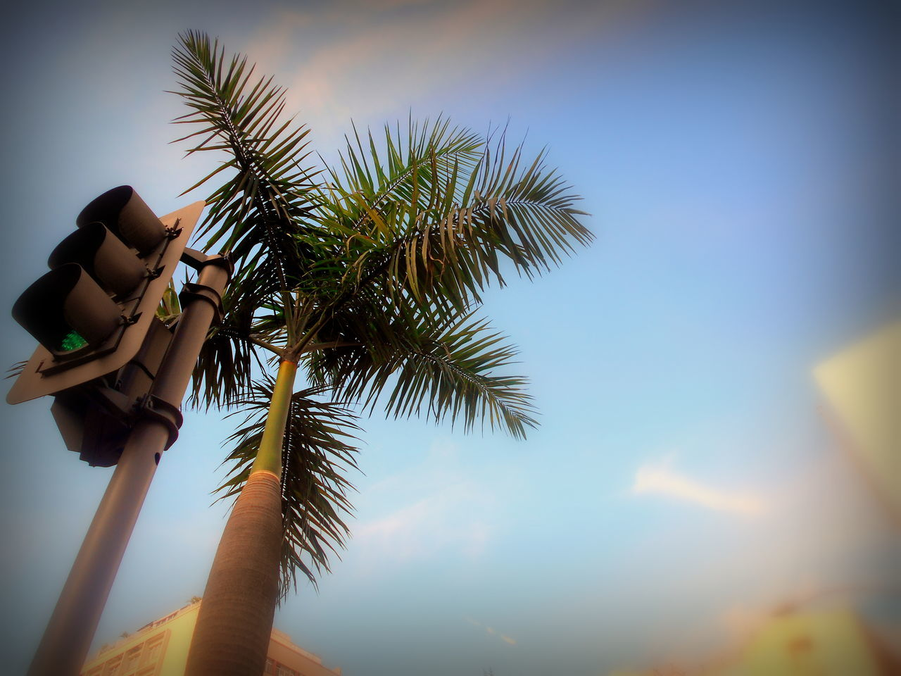 palm tree, tree, low angle view, day, outdoors, sky, real people, nature, beauty in nature, one person, close-up, people