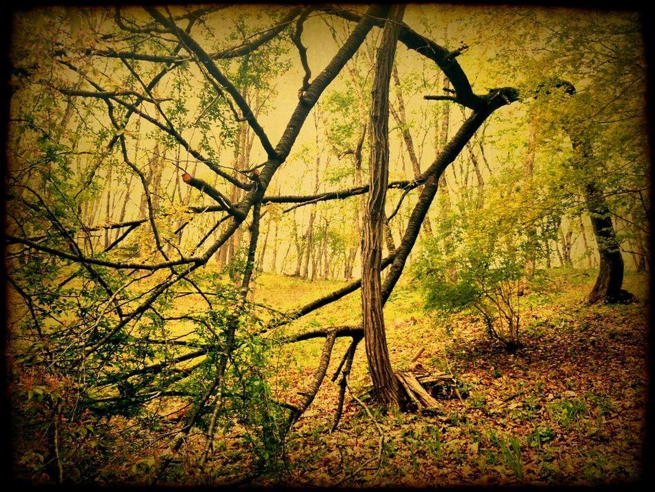 Trees Landscape Japan Taking Photos