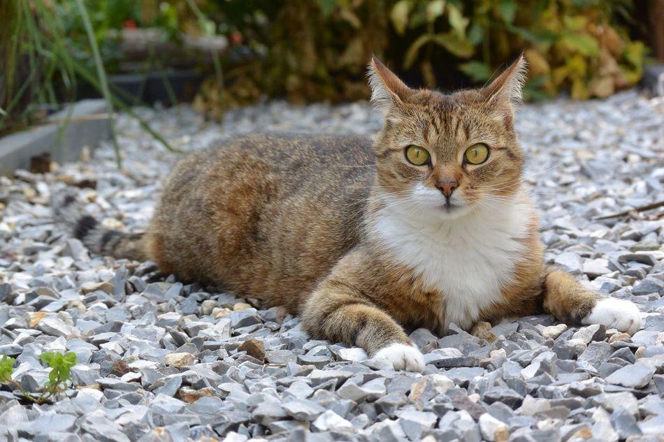 Cat Cat♡ Animals Animal