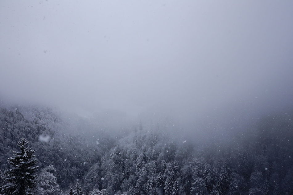 Hiking in snowfall, Switzerland. Abies Christmas Bad Weather Zürcher Oberland Cold Temperature Miles Away Betterlandscapes Christmastime EyeEm Nature Lover Fog Forest EyeEm Masterclass Heile Welt Fir Hiking Idyllic Landscapes Majestic Pristine Snow Snowfall Snowing Spruce Trees Switzerland Winter