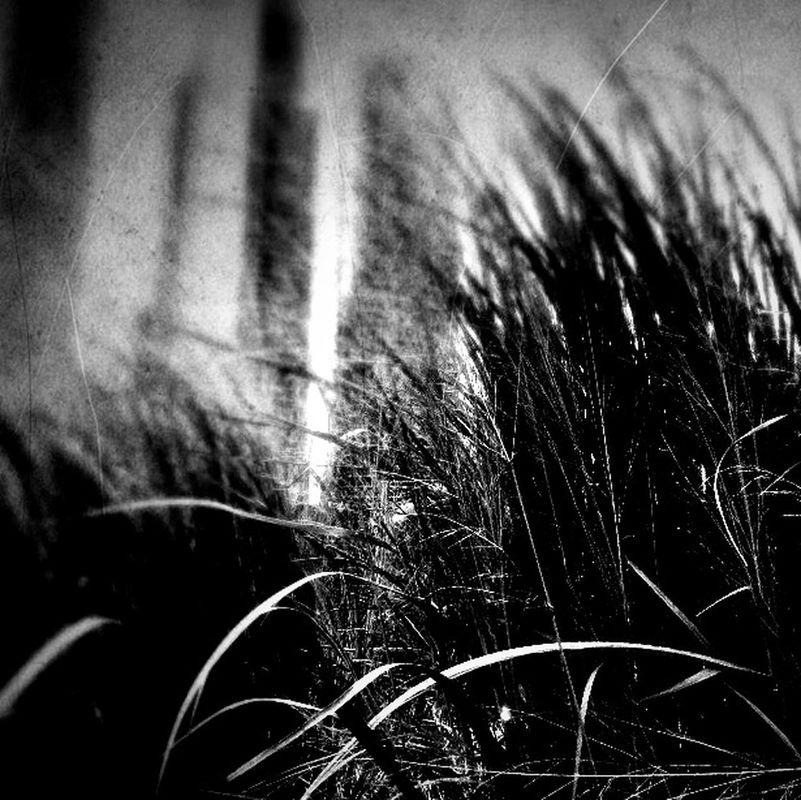 blackandwhite by MariaM